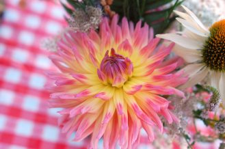Gabriola Island grown Dahlias