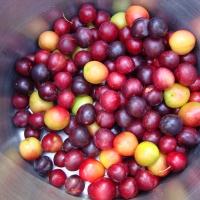 Wild Gabriola Plum Chutney and Gabriola Orchard Plum Marmalade