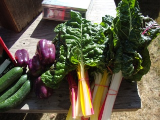 Gabriola Island grown organic vegetables
