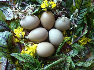 Flower and Pheasant Egg Salad https://bigsislittledish.wordpress.com/2012/04/26/flower-and-pheasant-egg-salad/