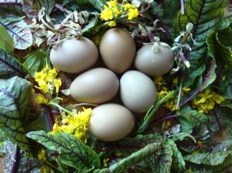 Flower and Pheasant Egg Salad https://bigsislittledish.wordpress.com/2012/04/26/flower-and-pheasant-egg-salad/