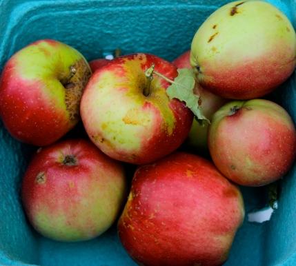 Gabriola Island Apples